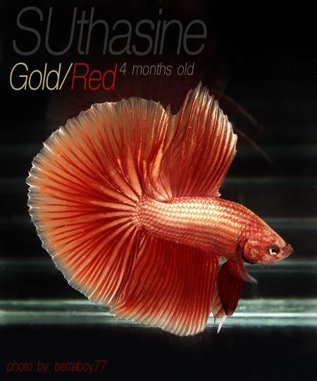 عکس های ماهی های زیبا